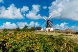 Nationalpark Vadehavet: Ruhig und weitläufig - ein Besuch im dänischen Wattenmeer - Bild 3