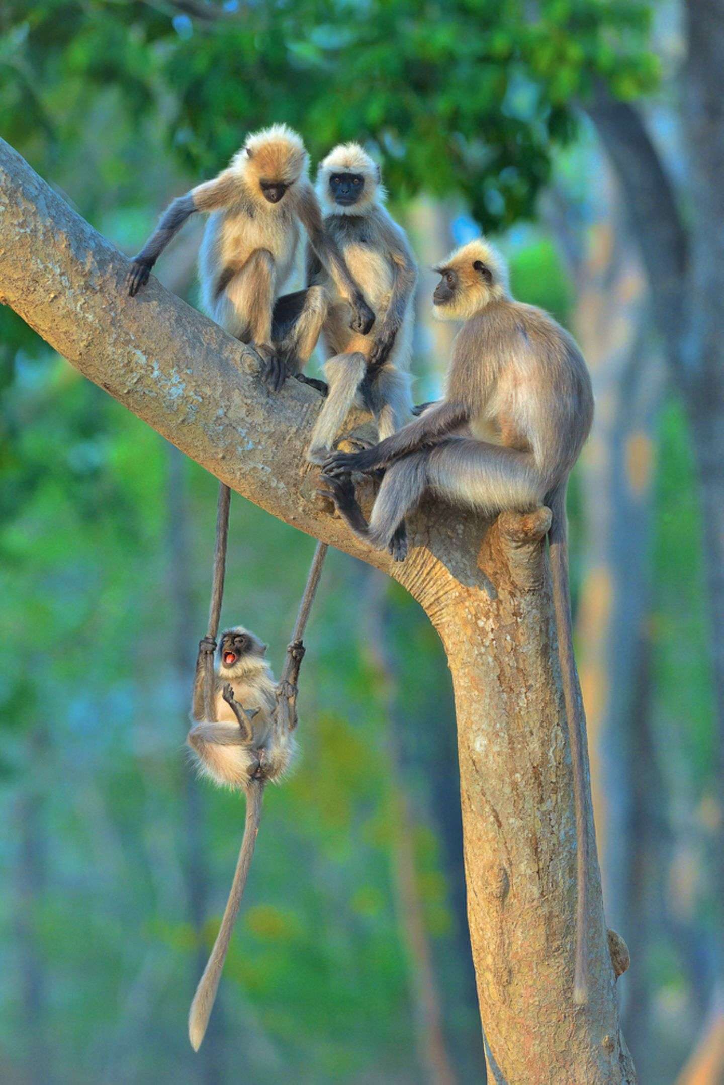 Thomas Vijayan/Comedy Wildlife Photography Award