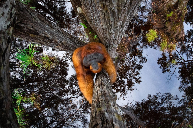 Thomas Vijayan/Siena International Photo Awards