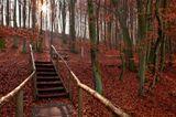 Ostsee: Nationalpark Jasmund: Rügens Herbstparadies - Bild 4