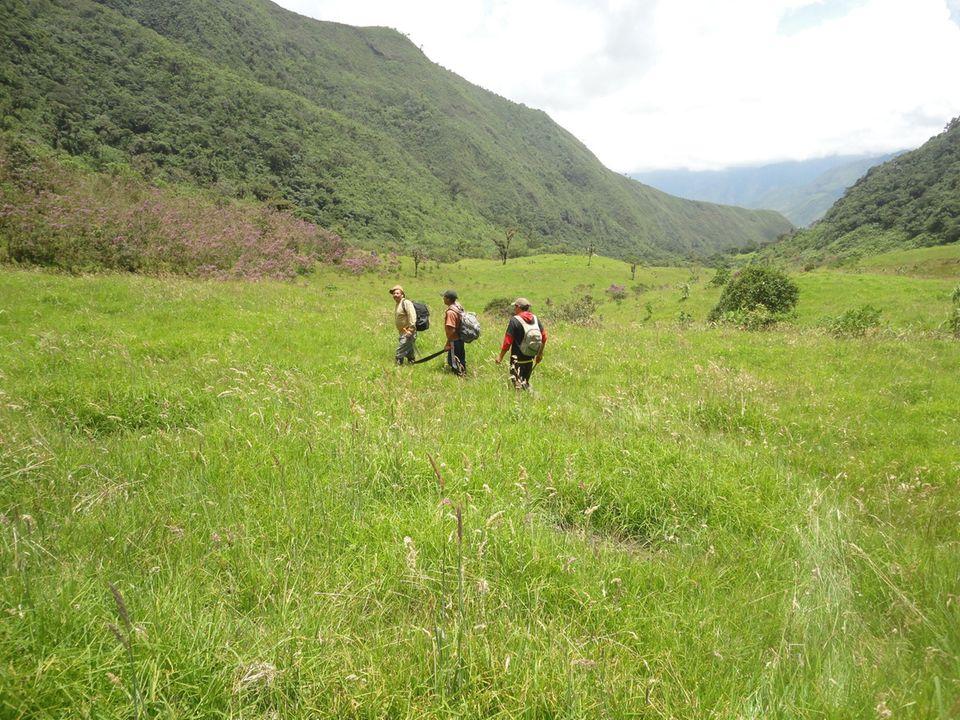 Dieses ehemalige Weideland am Rand des Schutzgebiets ist eine der Aufforstungsflächen