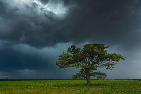 Eiche bei Gewitter