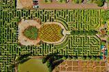 Das Ananas-Labyrinth auf Hawaii