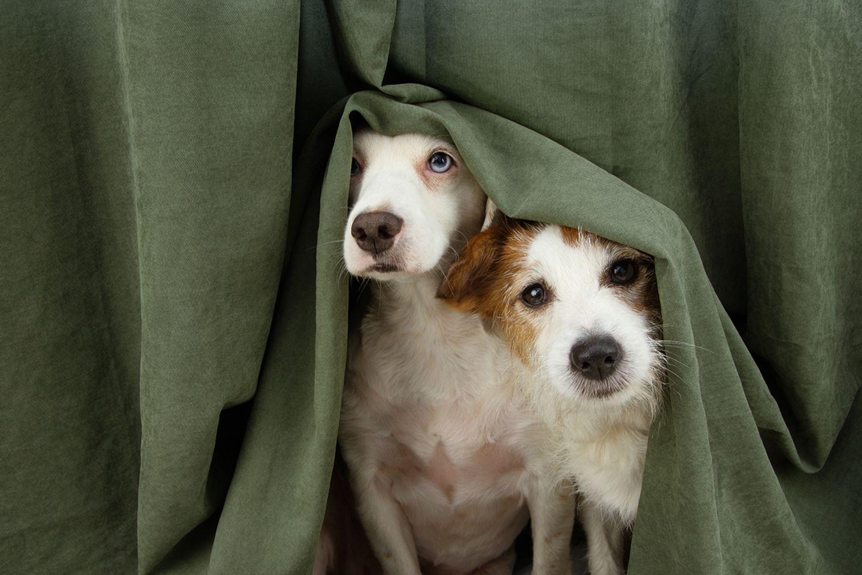 Ängstliche Hunde