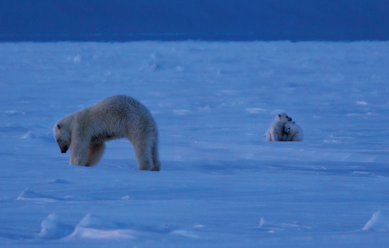 Das Königreich der Eisbären