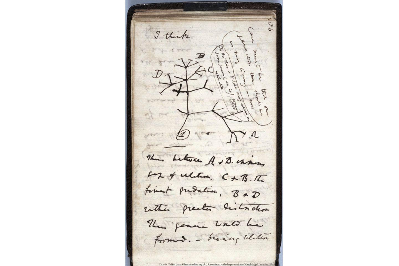 Tree of Life, Darwin