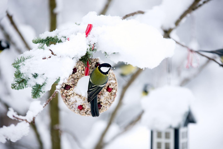 Vögel füttern im Winter
