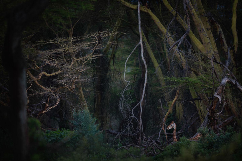 Roberto Marchegiani/Nature Photographer of the Year