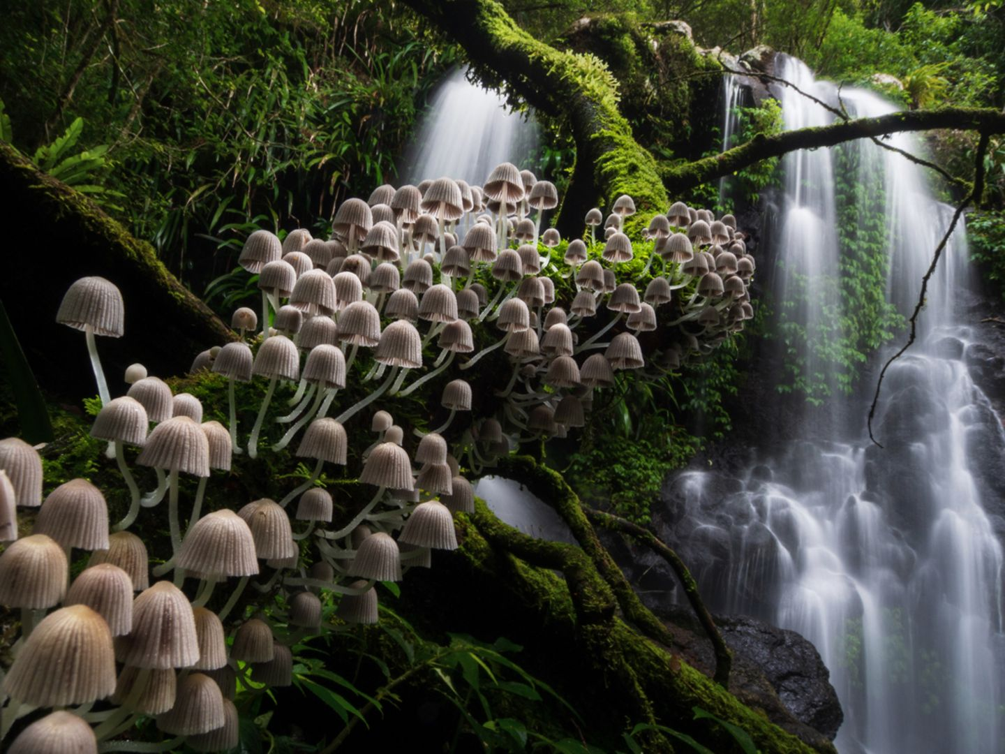 Kevin De Vree/Nature Photographer of the Year