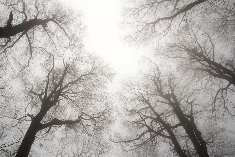 Bäume ohne Laub