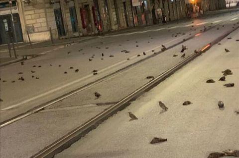 Tote Stare auf den Straßen von Rom