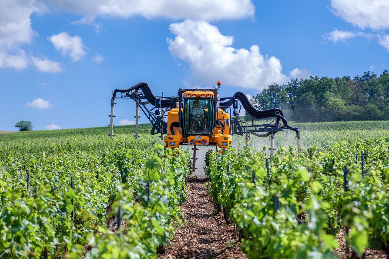 Pestizidausbringung im Weinanbau
