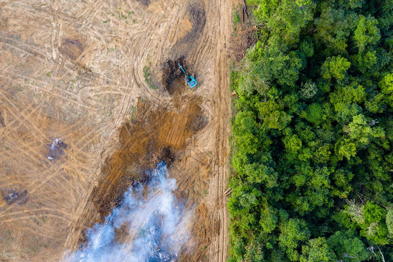 Abholzung des Regenwaldes