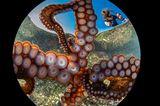 Gaetano Dario Gargiulo/Ocean Art 2020 Contest