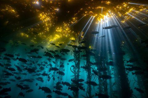 Jon Anderson/Ocean Art 2020 Contest
