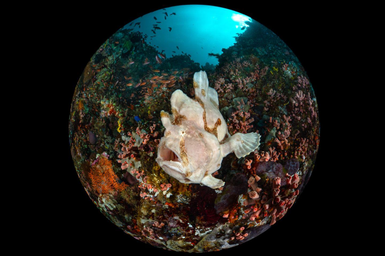 Enrico Somogyi/Ocean Art 2020 Contest