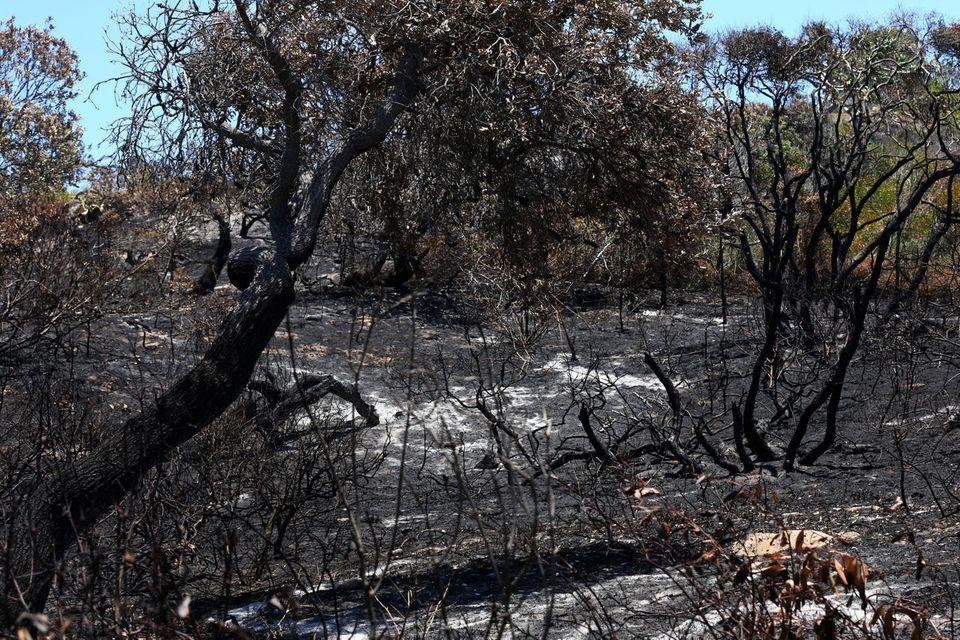 Buschbrände auf Fraser Island