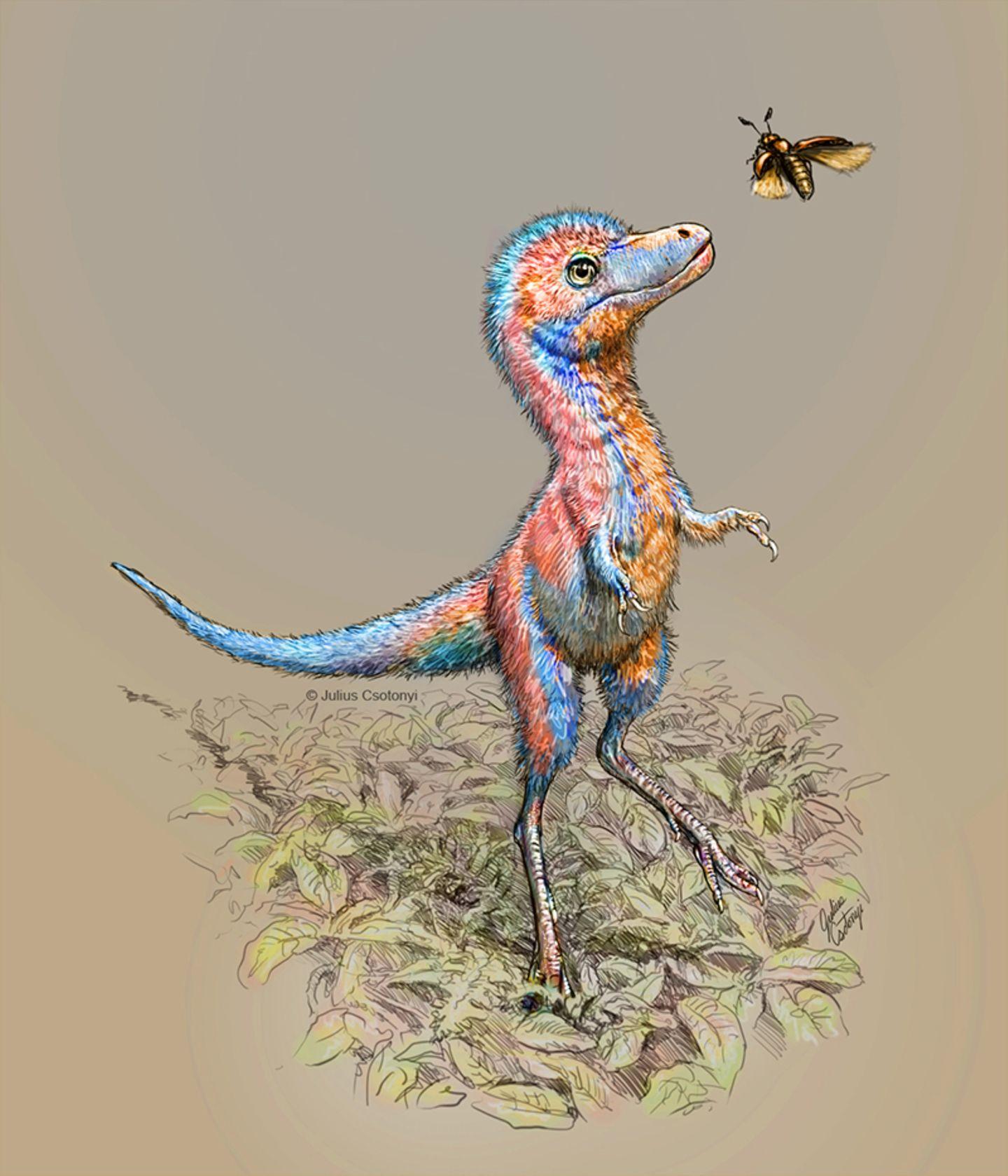 Baby-Tyrannosaurus
