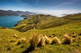 Grüne Graslandschaften von Marlborough Sounds in Neuseeland