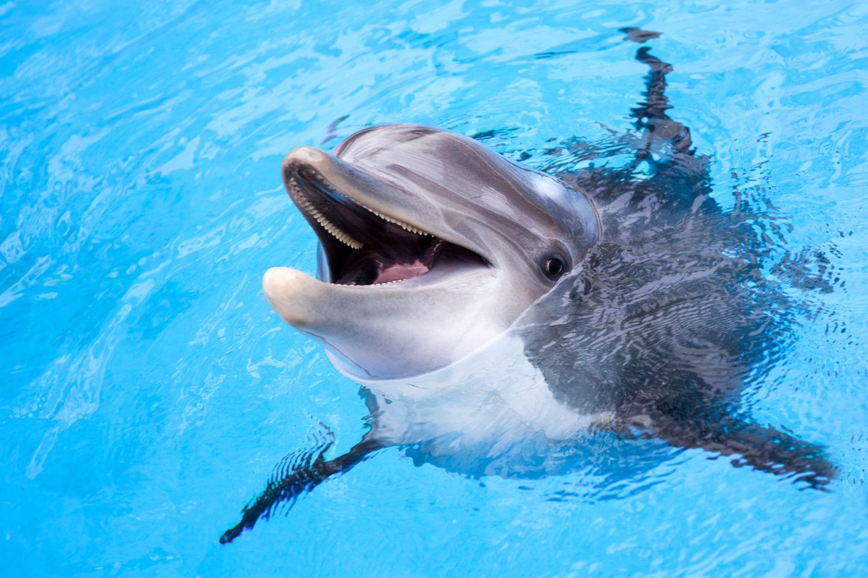 Tierschutz: Ein Delfinarium wird es im Asterix-Park bei Paris bald nicht mehr geben. Die Parkbetreiber bestreiten, dass ihre Entscheidung eine Reaktion auf die Kritik an der Tierhaltung sei - trotzdem begrüßen Tierschützer die Schließung