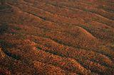 Große Victoria-Wüste