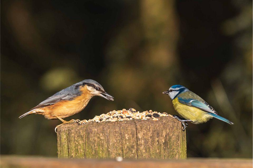 Vögel an einer Futterstelle