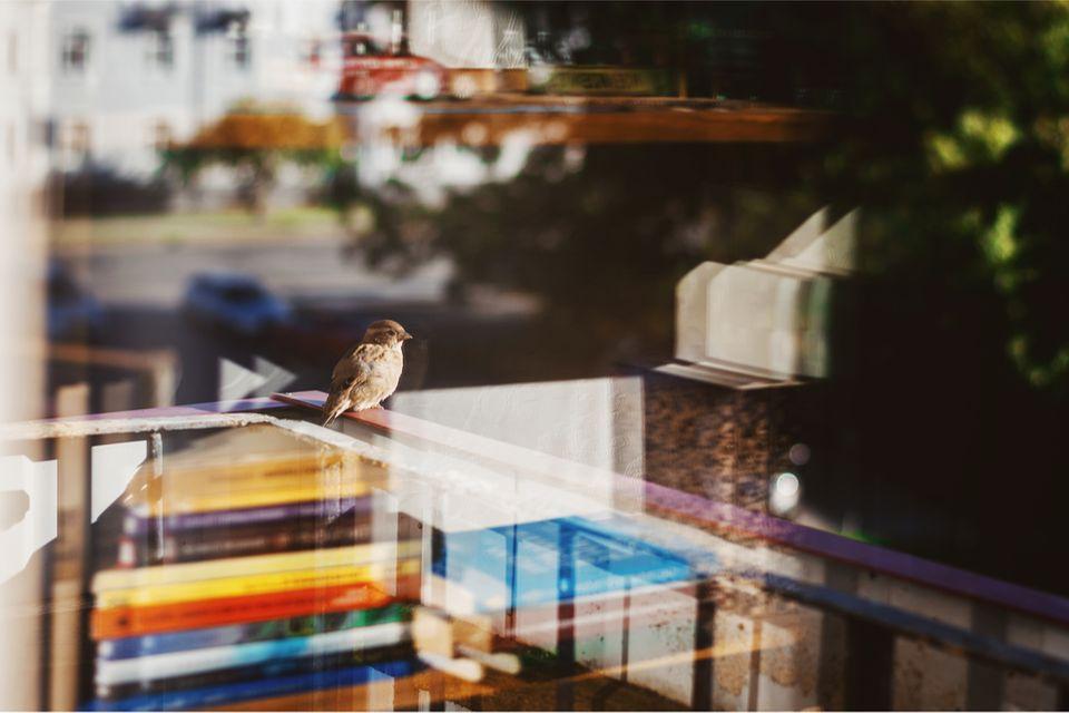 Ein Vogel sitzt auf einem Balkon
