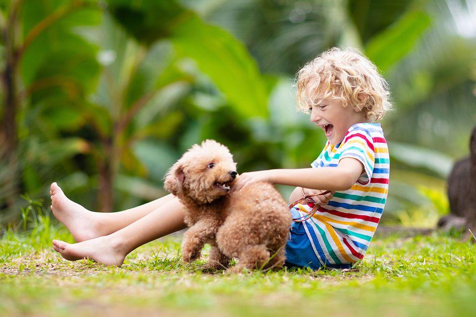 Petit garçon et chiot jouant sur la prairie
