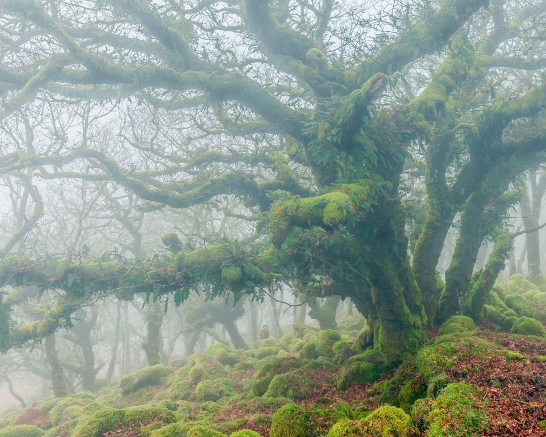 Wistman's Wood, England