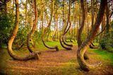 Krzywy Las, Polen