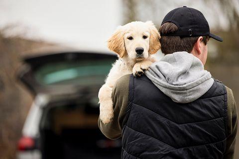 Hunde-Diebstahl