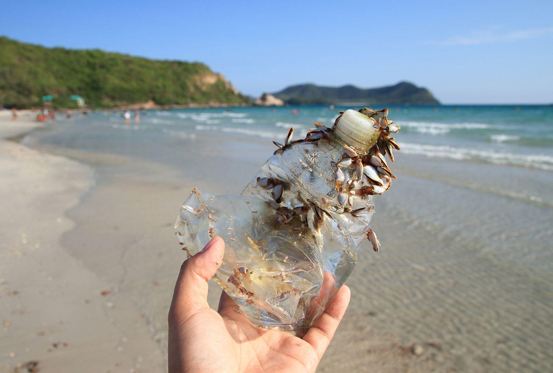 Muscheln an Meeresplastik