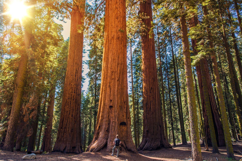 Sequoia-Nationalpark, USA