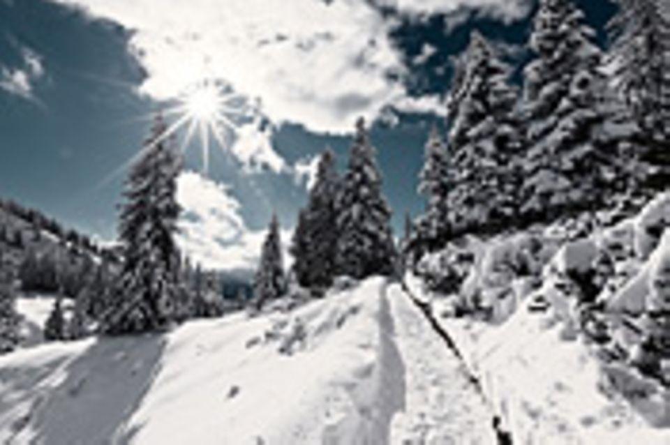 Schiebepuzzle: Winterwald