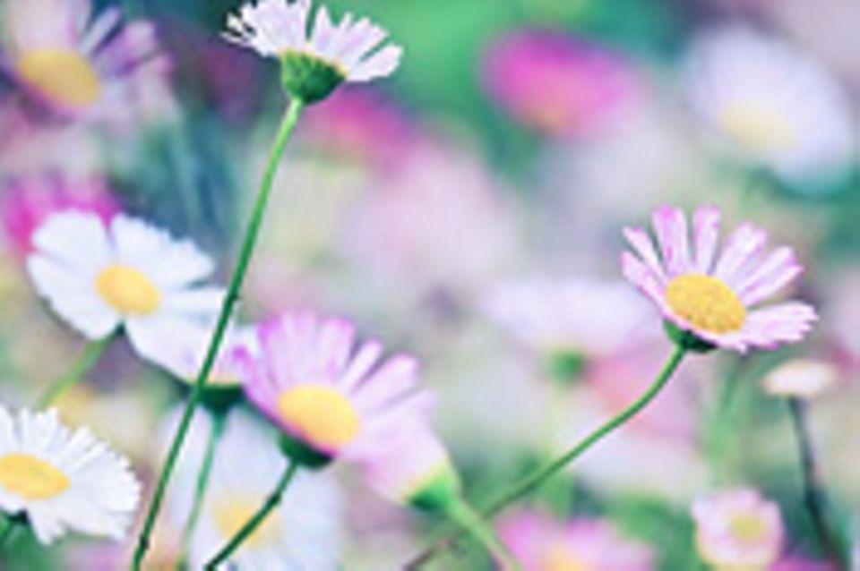 Schiebepuzzle: Frühling