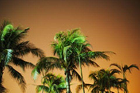 Schiebepuzzle: Palmen