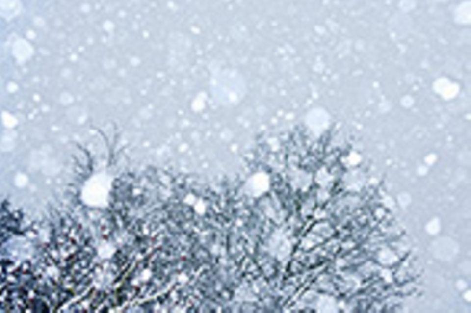 Wettbewerb: Schreibwettbewerb-Sieger: Schnee gestern, Schnee heute