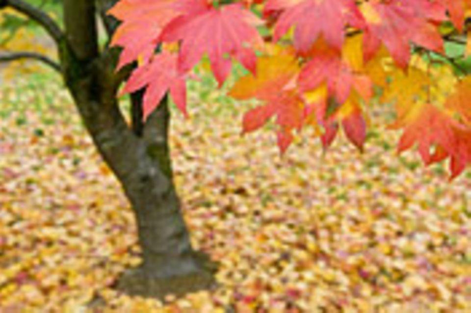 Schiebepuzzle: Herbst
