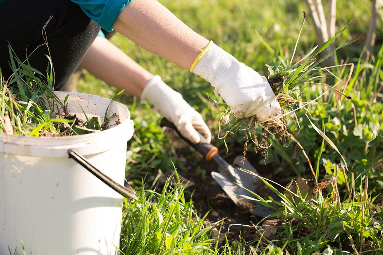 Unkraut entfernen im Garten