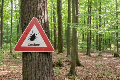 Zecken-Warnschild im Wald