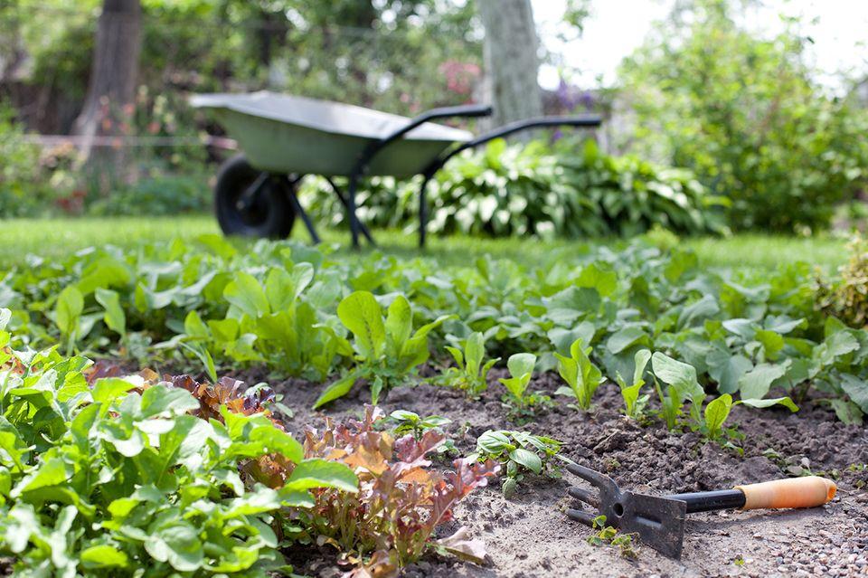 Kräutergarten mit Schubkarre im Hintergrund