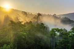 Wolkenverhangener Regenwald von Borneo