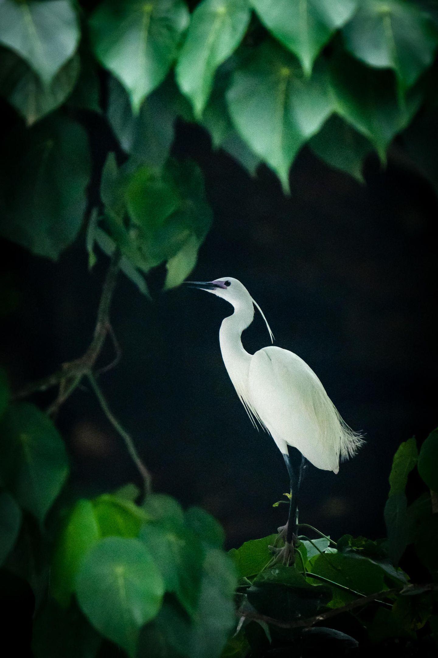 Au Hin Man, Hong Kong, Shortlist, Open, Natural World & Wildlife, 2021 Sony World Photography Awards