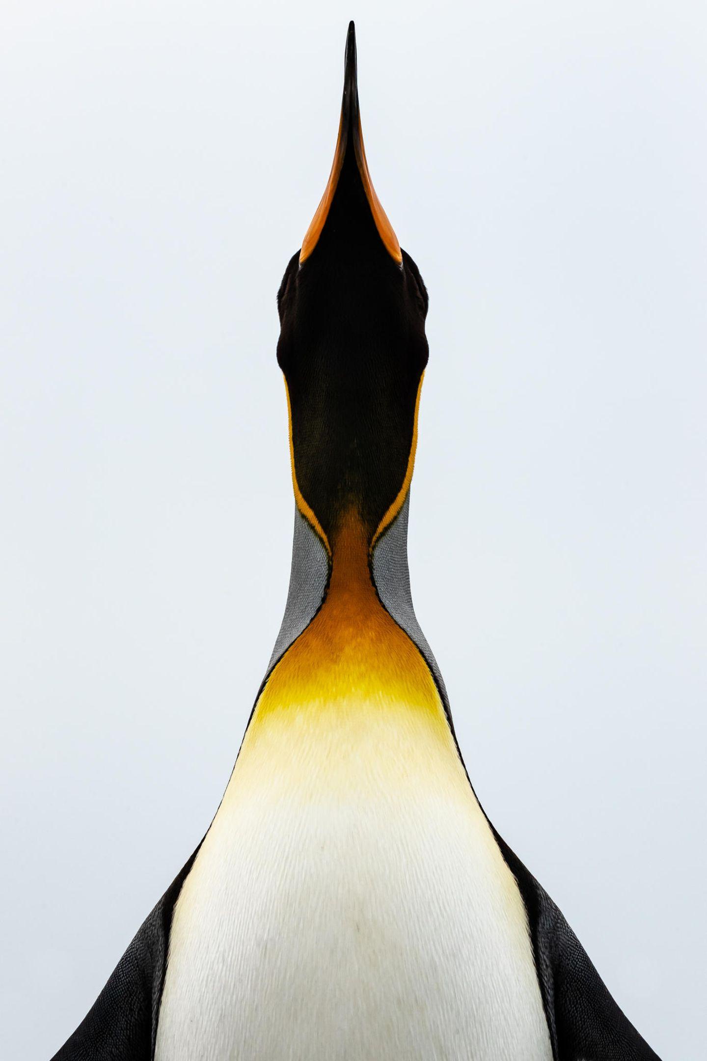 Koki Shinoda, Japan, Shortlist, Open, Natural World & Wildlife, 2021 Sony World Photography Awards