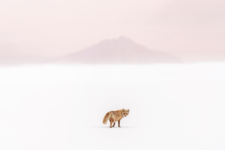 Yuta Doto, Japan, Shortlist, Open, Natural World & Wildlife, 2021 Sony World Photography Awards