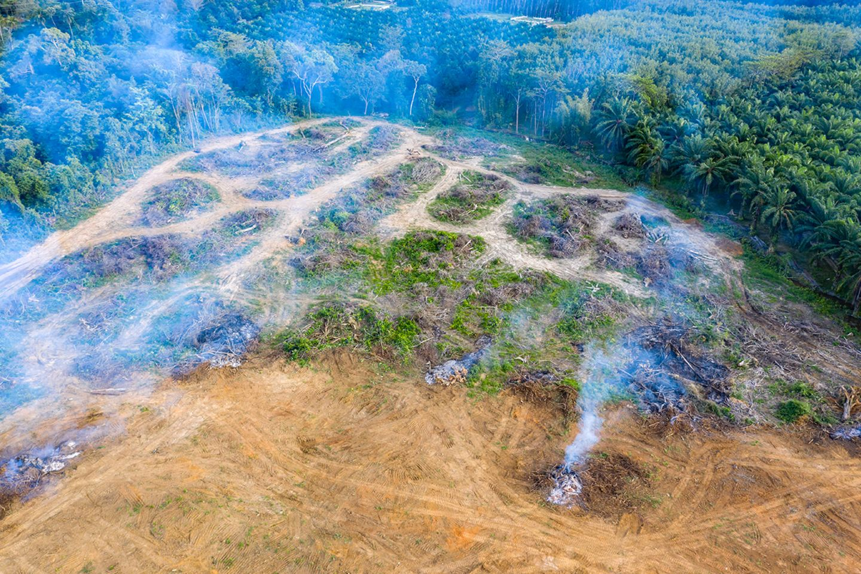 Schneller Profit vor langfristigem Nutzen: In tropischen Regionen muss Regenwald oft Palmöl-Plantagen weichen