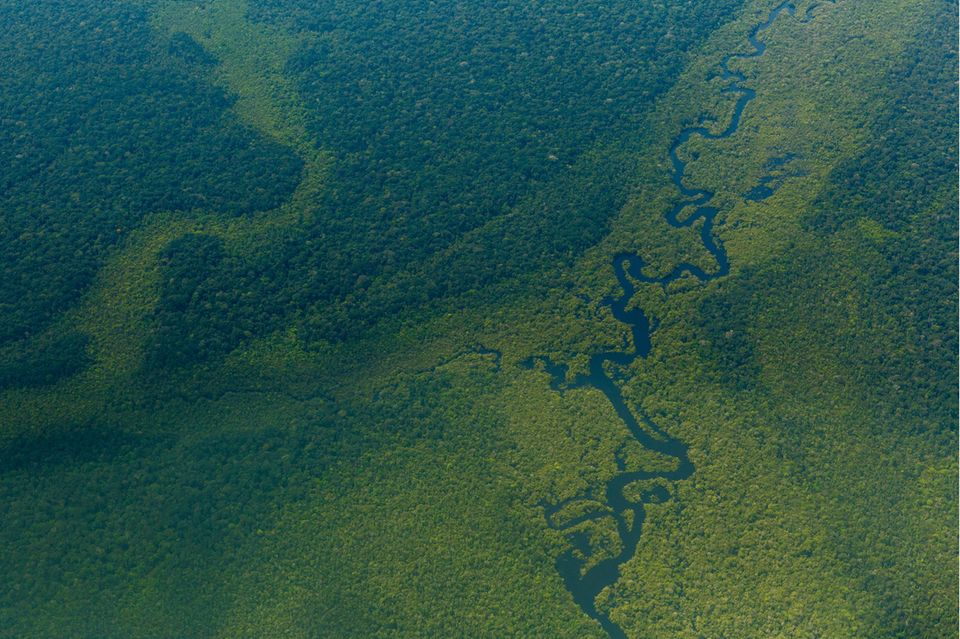 Luftblick auf den Wald im Amazonas nahe Sao Gabriel da Cachoeira