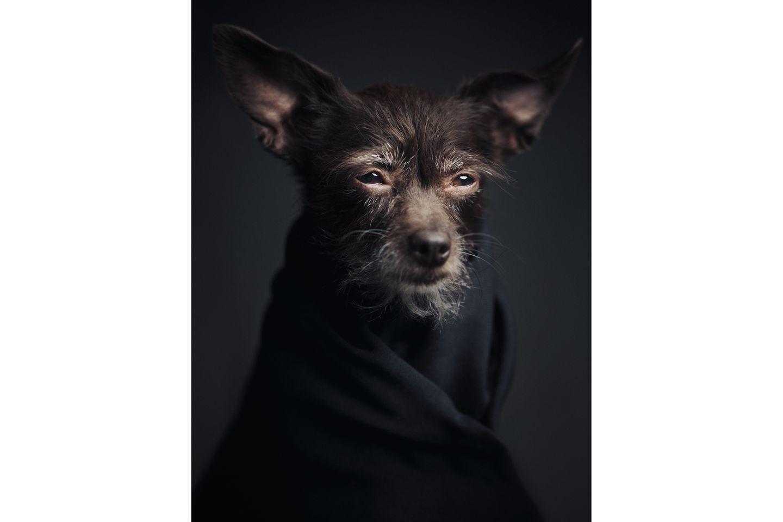 Vincent Lagrange - Dogs