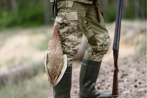 Enten werden im Flug erschossen. Eine unbekannte Anzahl von ihnen erleidet dabei nur Streif- oder Steckschüsse