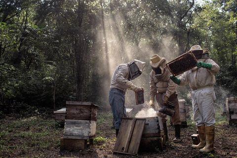 Eine Gruppe von Maya-Imkern kümmern sich um ihre Bienenstöcke